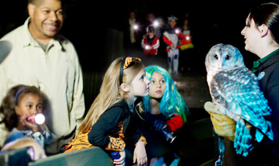 children in halloween costumes listening to lady as she holds an owl
