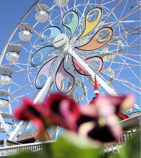 Hersheypark Ferris Wheel in focus and pink flower out of focus in the foreground